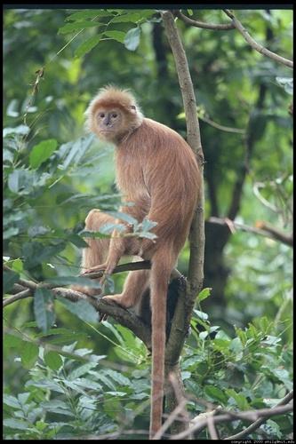 a-monkey_500
