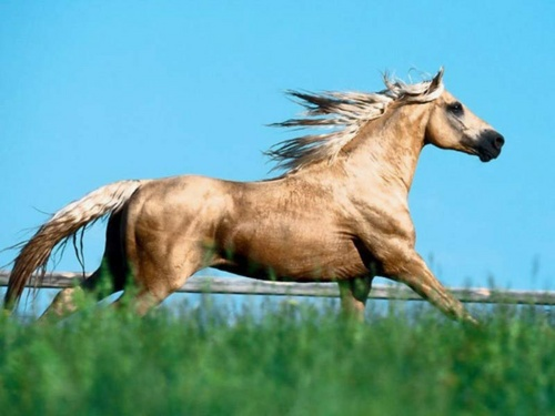 horse_500