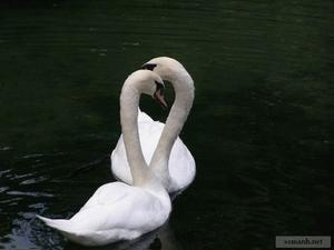 0.animals_in_love_15.jpg