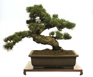 4bonsai_tree2.jpg