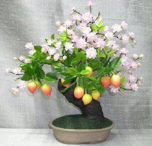 Prunus_bonsai_tree